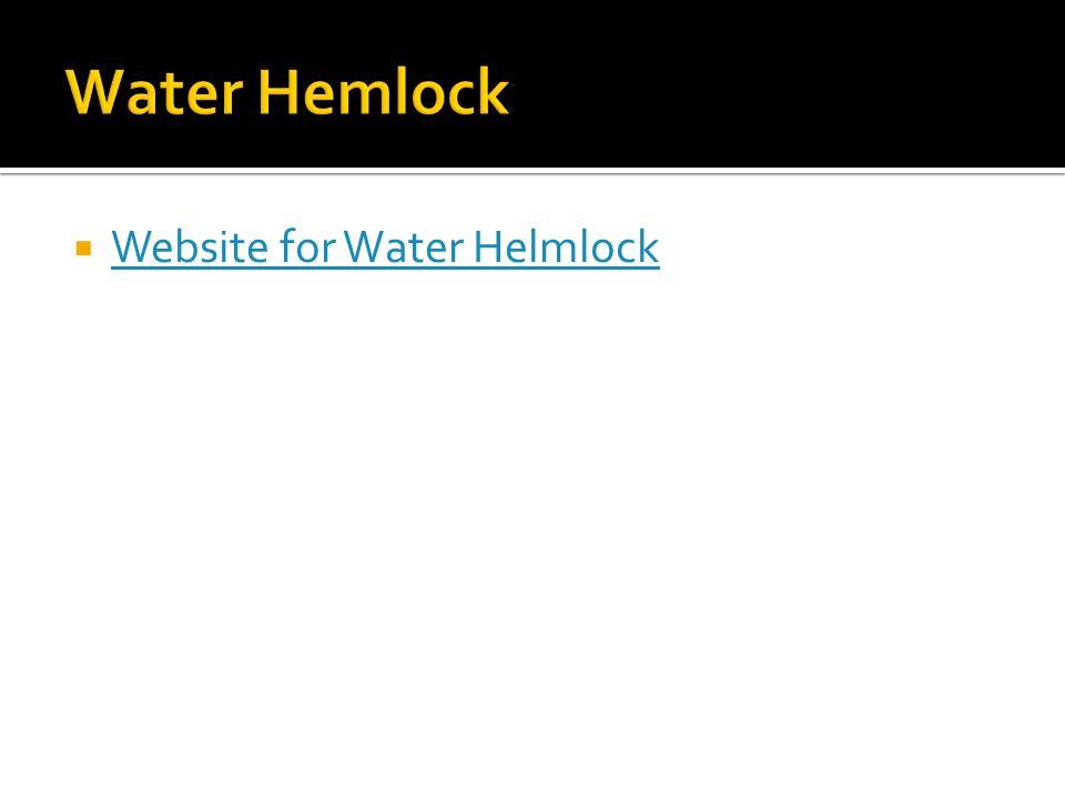  Website for Water Helmlock Website for Water Helmlock