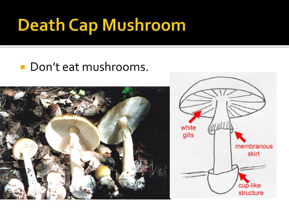  Don't eat mushrooms.