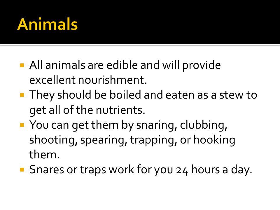  All animals are edible and will provide excellent nourishment.