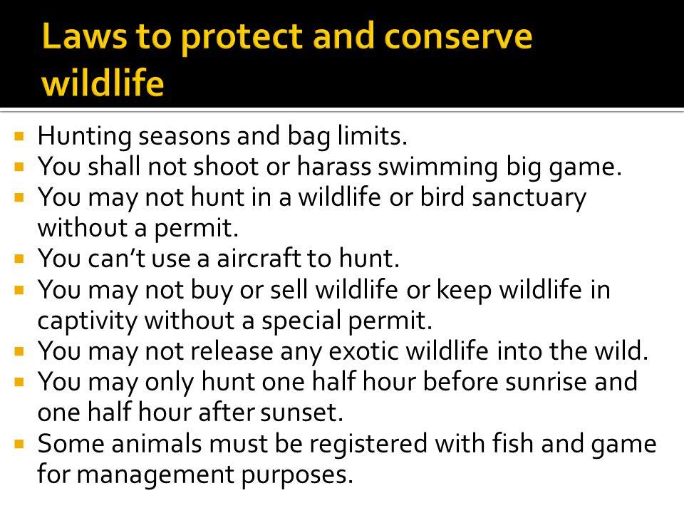  Hunting seasons and bag limits.  You shall not shoot or harass swimming big game.