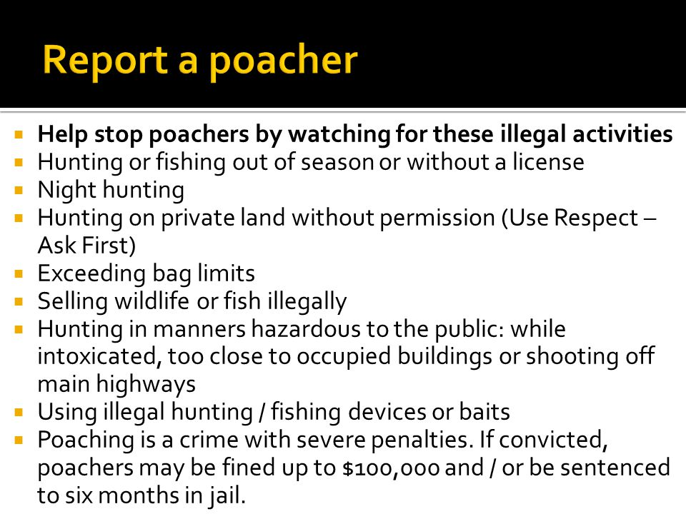  Help stop poachers by watching for these illegal activities  Hunting or fishing out of season or without a license  Night hunting  Hunting on private land without permission (Use Respect – Ask First)  Exceeding bag limits  Selling wildlife or fish illegally  Hunting in manners hazardous to the public: while intoxicated, too close to occupied buildings or shooting off main highways  Using illegal hunting / fishing devices or baits  Poaching is a crime with severe penalties.