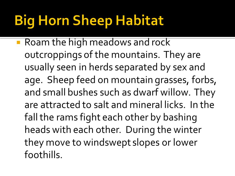  Roam the high meadows and rock outcroppings of the mountains.