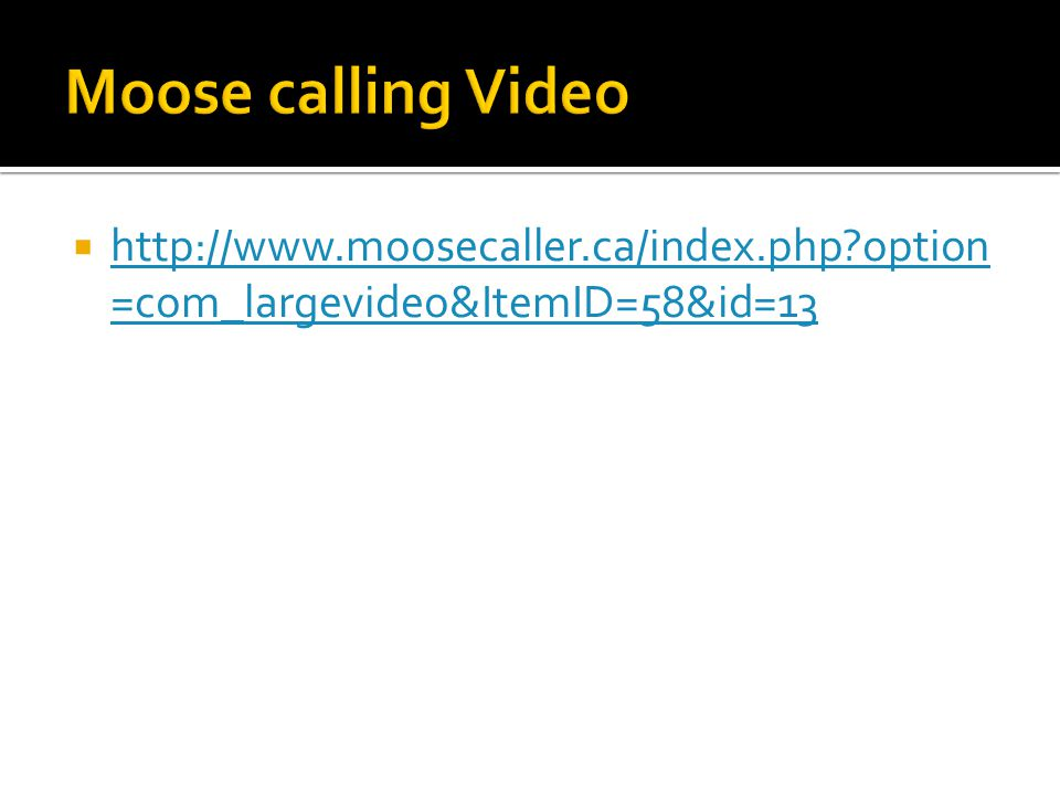  http://www.moosecaller.ca/index.php option =com_largevideo&ItemID=58&id=13 http://www.moosecaller.ca/index.php option =com_largevideo&ItemID=58&id=13