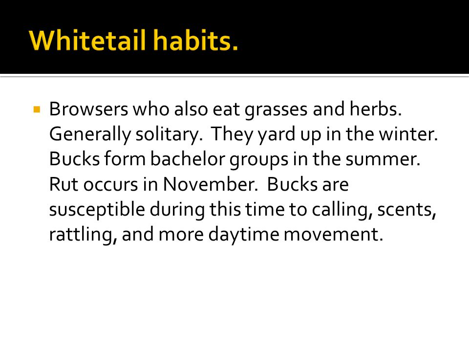 Browsers who also eat grasses and herbs. Generally solitary.