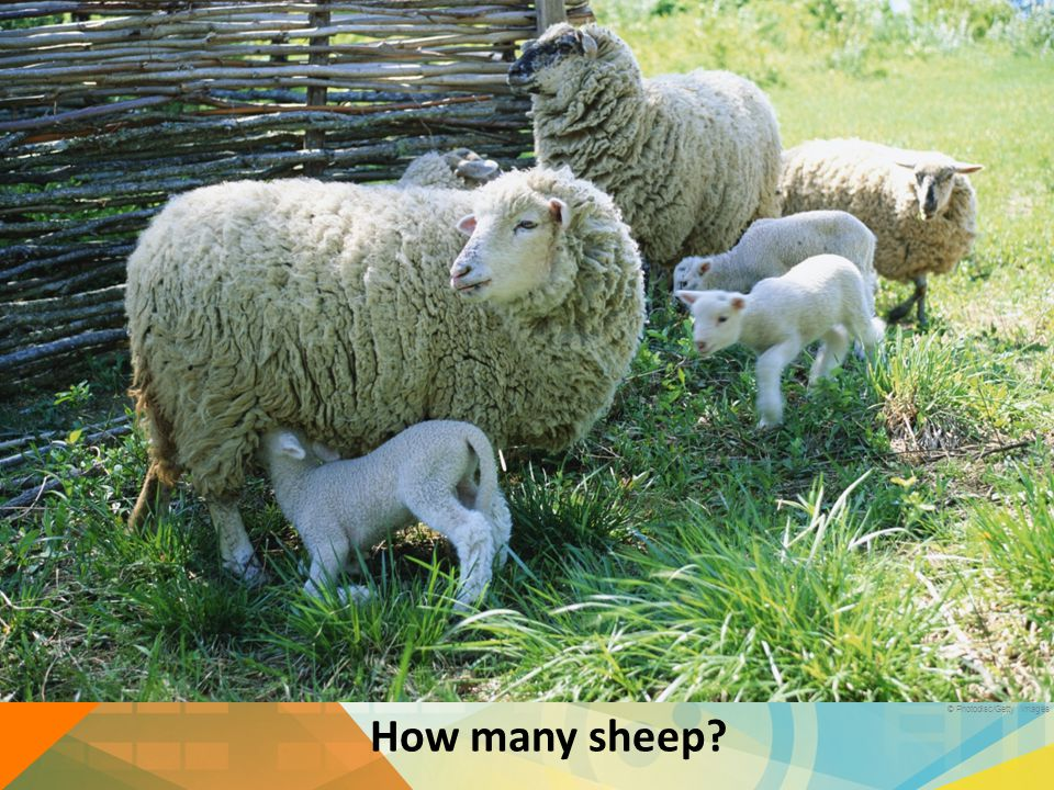 How many sheep? © Photodisc/Getty Images