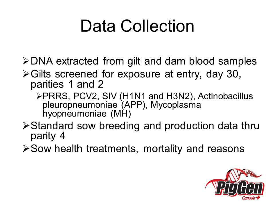 Data Collection  DNA extracted from gilt and dam blood samples  Gilts screened for exposure at entry, day 30, parities 1 and 2  PRRS, PCV2, SIV (H1N1 and H3N2), Actinobacillus pleuropneumoniae (APP), Mycoplasma hyopneumoniae (MH)  Standard sow breeding and production data thru parity 4  Sow health treatments, mortality and reasons