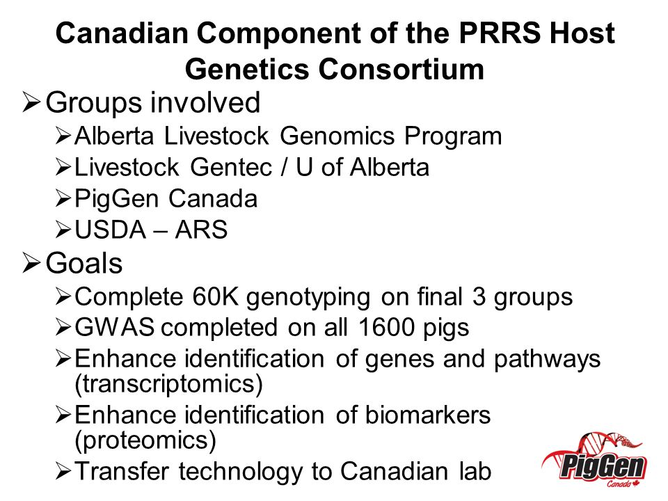 Canadian Component of the PRRS Host Genetics Consortium  Groups involved  Alberta Livestock Genomics Program  Livestock Gentec / U of Alberta  PigGen Canada  USDA – ARS  Goals  Complete 60K genotyping on final 3 groups  GWAS completed on all 1600 pigs  Enhance identification of genes and pathways (transcriptomics)  Enhance identification of biomarkers (proteomics)  Transfer technology to Canadian lab