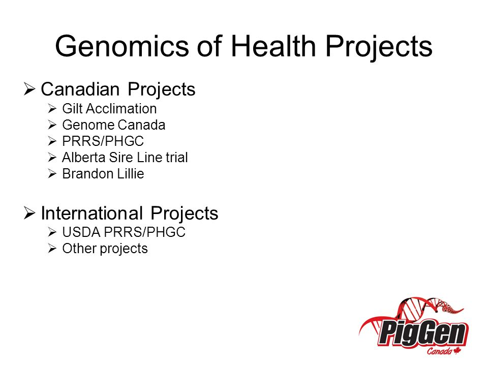 Genomics of Health Projects  Canadian Projects  Gilt Acclimation  Genome Canada  PRRS/PHGC  Alberta Sire Line trial  Brandon Lillie  International Projects  USDA PRRS/PHGC  Other projects