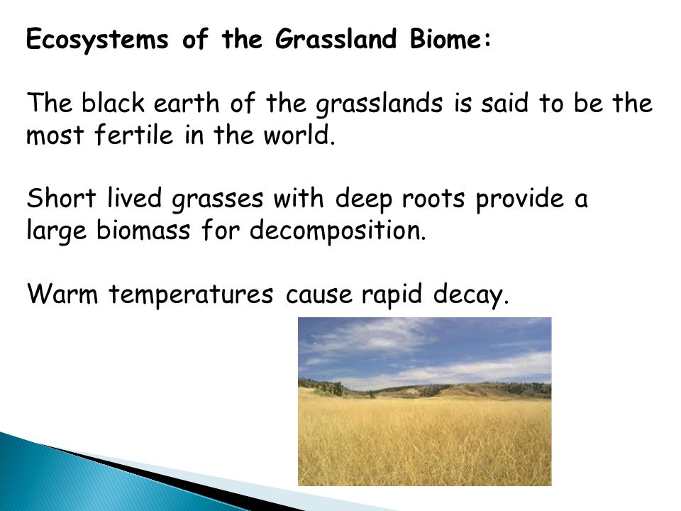 Ecosystems of the Grassland Biome: The black earth of the grasslands is said to be the most fertile in the world. Short lived grasses with deep roots