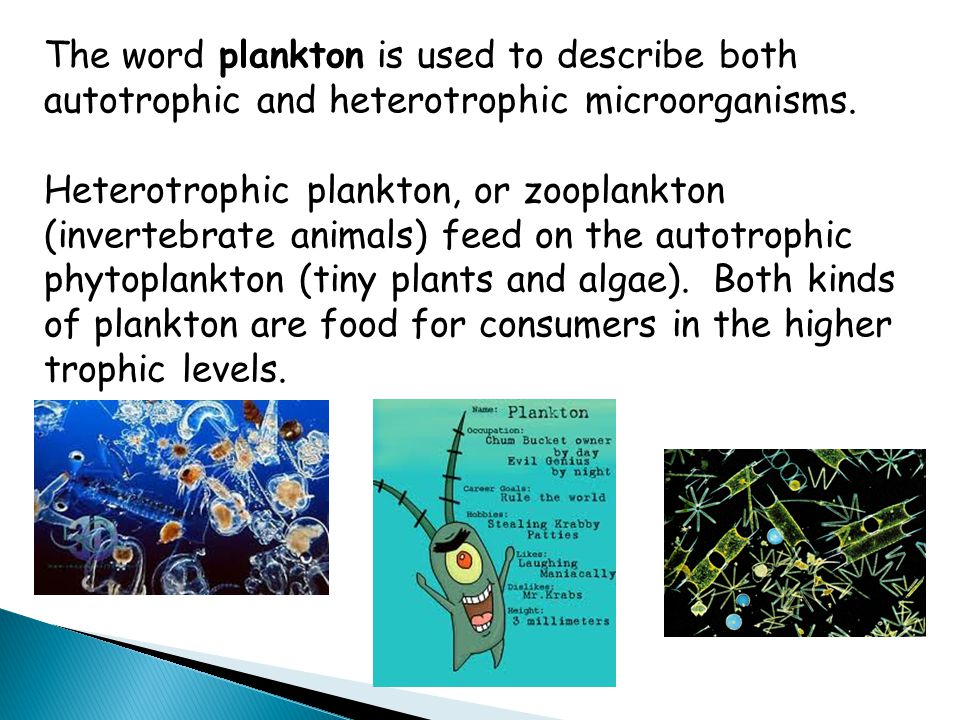 The word plankton is used to describe both autotrophic and heterotrophic microorganisms. Heterotrophic plankton, or zooplankton (invertebrate animals)