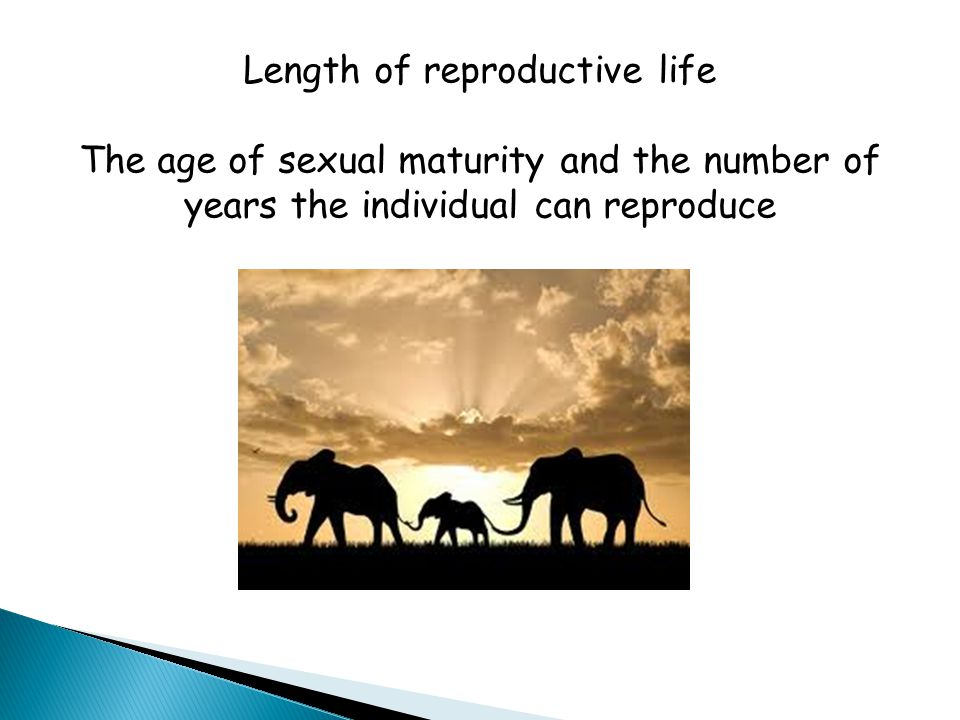 Length of reproductive life The age of sexual maturity and the number of years the individual can reproduce