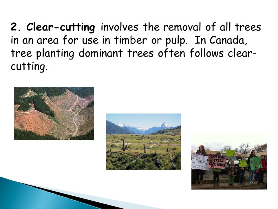 2. Clear-cutting involves the removal of all trees in an area for use in timber or pulp. In Canada, tree planting dominant trees often follows clear-