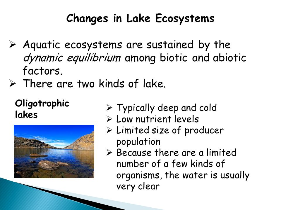Changes in Lake Ecosystems  Aquatic ecosystems are sustained by the dynamic equilibrium among biotic and abiotic factors.  There are two kinds of la
