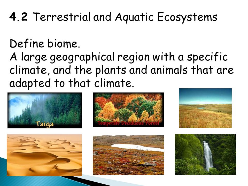 Changes in Lake Ecosystems  Aquatic ecosystems are sustained by the dynamic equilibrium among biotic and abiotic factors.