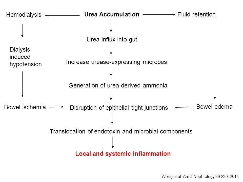 Urea AccumulationFluid retention Hemodialysis Urea influx into gut Increase urease-expressing microbes Generation of urea-derived ammonia Disruption o