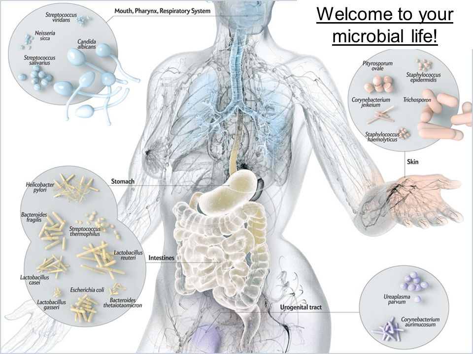 3Presentation Title Here | Welcome to your microbial life!