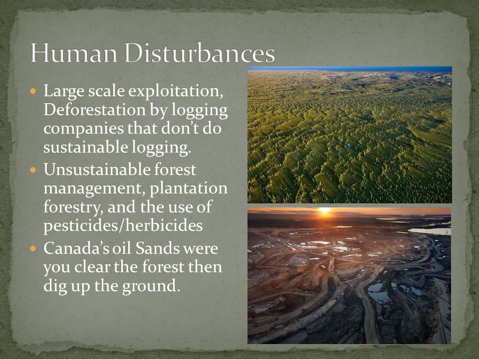 Large scale exploitation, Deforestation by logging companies that don't do sustainable logging.