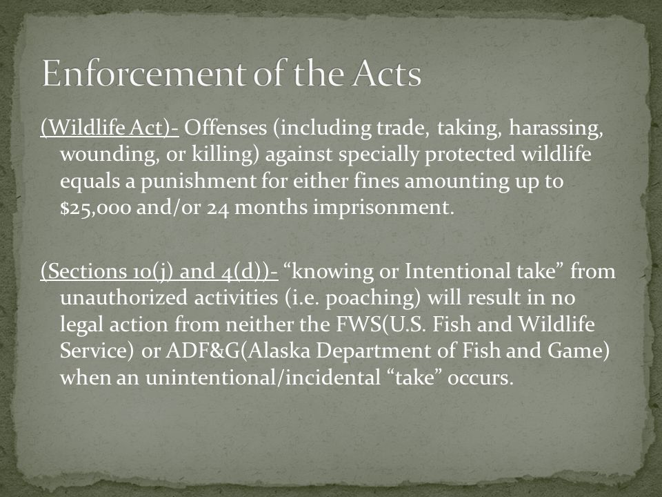 (Wildlife Act)- Offenses (including trade, taking, harassing, wounding, or killing) against specially protected wildlife equals a punishment for eithe