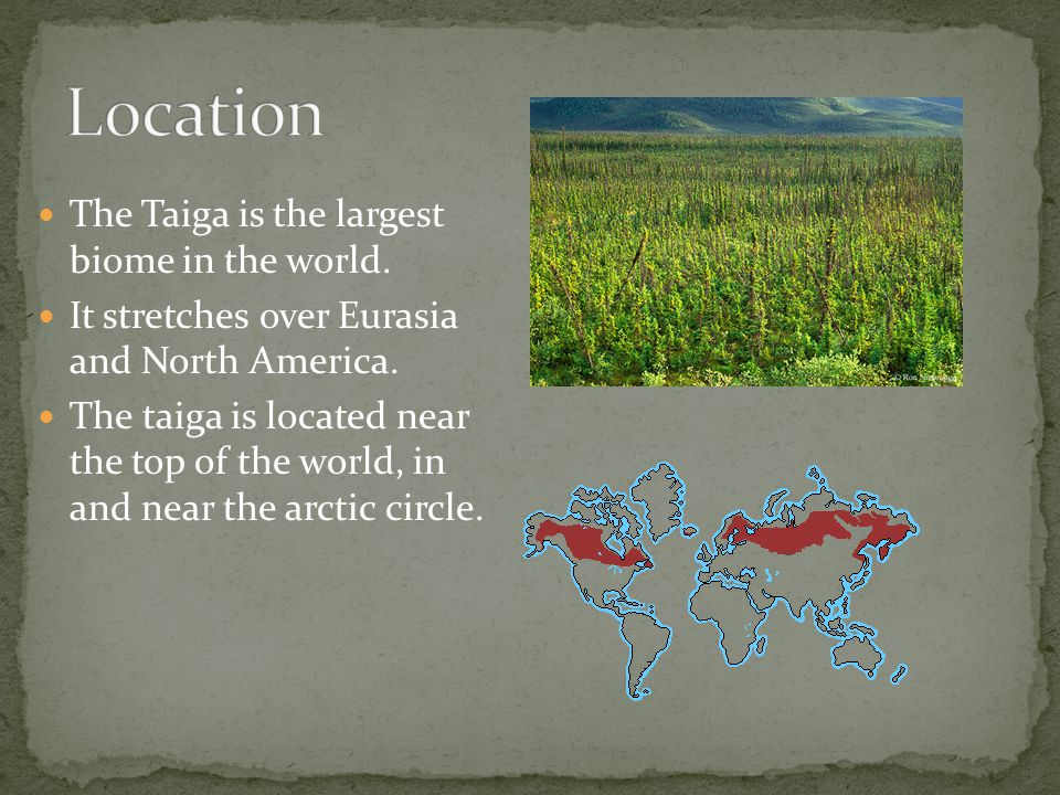 The Taiga is the largest biome in the world. It stretches over Eurasia and North America. The taiga is located near the top of the world, in and near