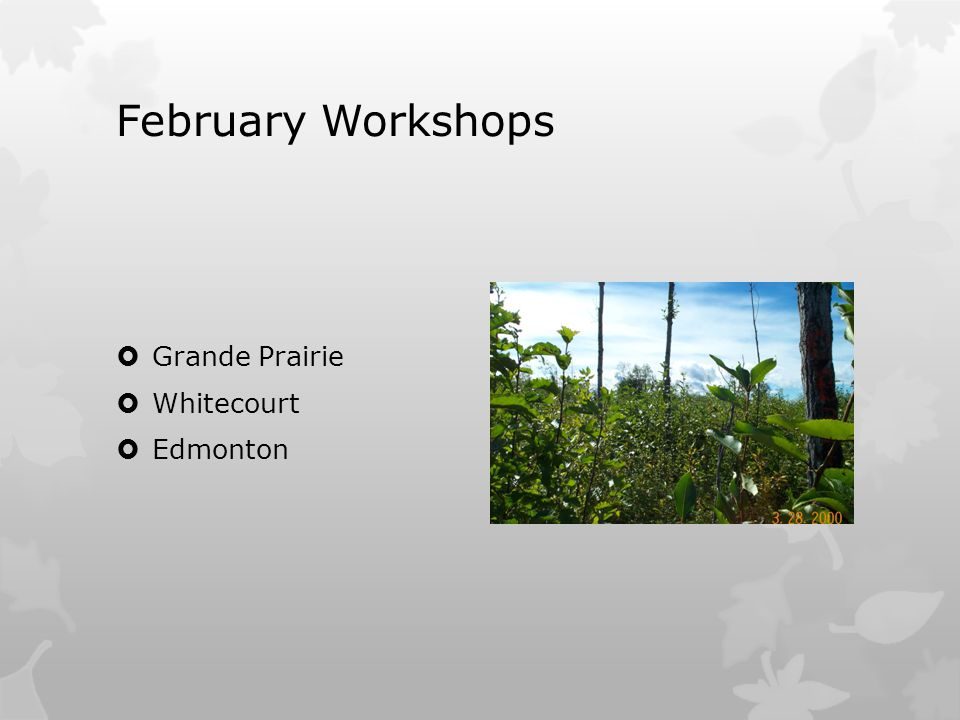 February Workshops  Grande Prairie  Whitecourt  Edmonton