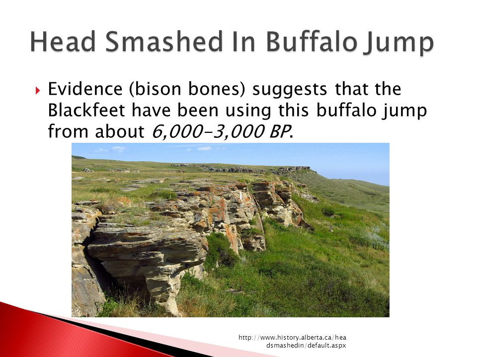  Evidence (bison bones) suggests that the Blackfeet have been using this buffalo jump from about 6,000-3,000 BP. http://www.history.alberta.ca/hea ds