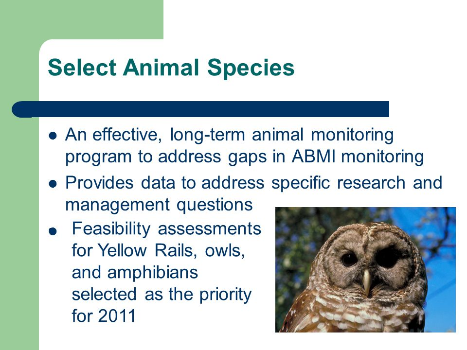 Select Animal Species An effective, long-term animal monitoring program to address gaps in ABMI monitoring Provides data to address specific research and management questions Feasibility assessments for Yellow Rails, owls, and amphibians selected as the priority for 2011