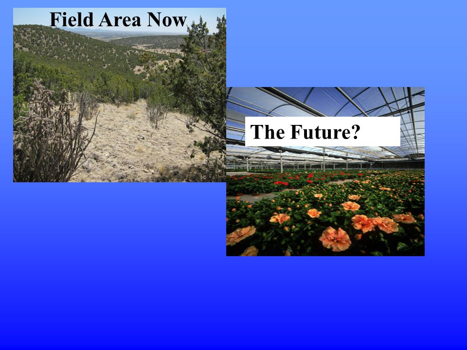 Field Area Now The Future?