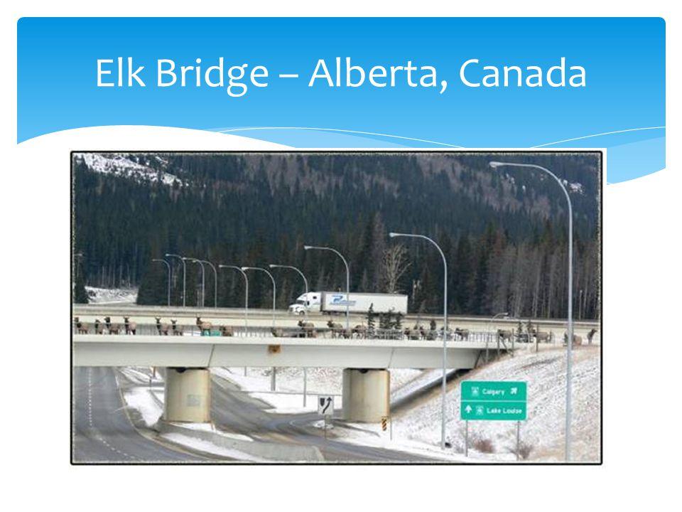 Elk Bridge – Alberta, Canada