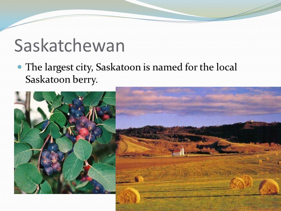 Saskatchewan The largest city, Saskatoon is named for the local Saskatoon berry.