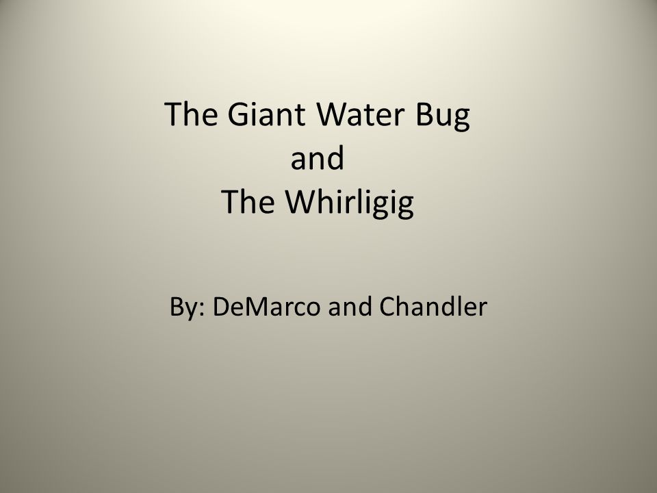 The Giant Water Bug and The Whirligig By: DeMarco and Chandler