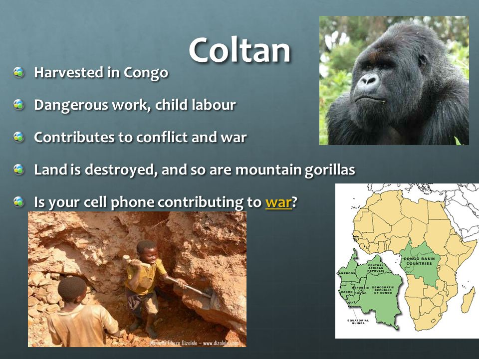 Coltan Harvested in Congo Dangerous work, child labour Contributes to conflict and war Land is destroyed, and so are mountain gorillas Is your cell phone contributing to war.
