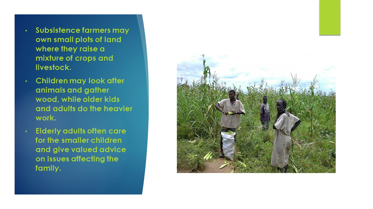 Subsistence farmers may own small plots of land where they raise a mixture of crops and livestock.