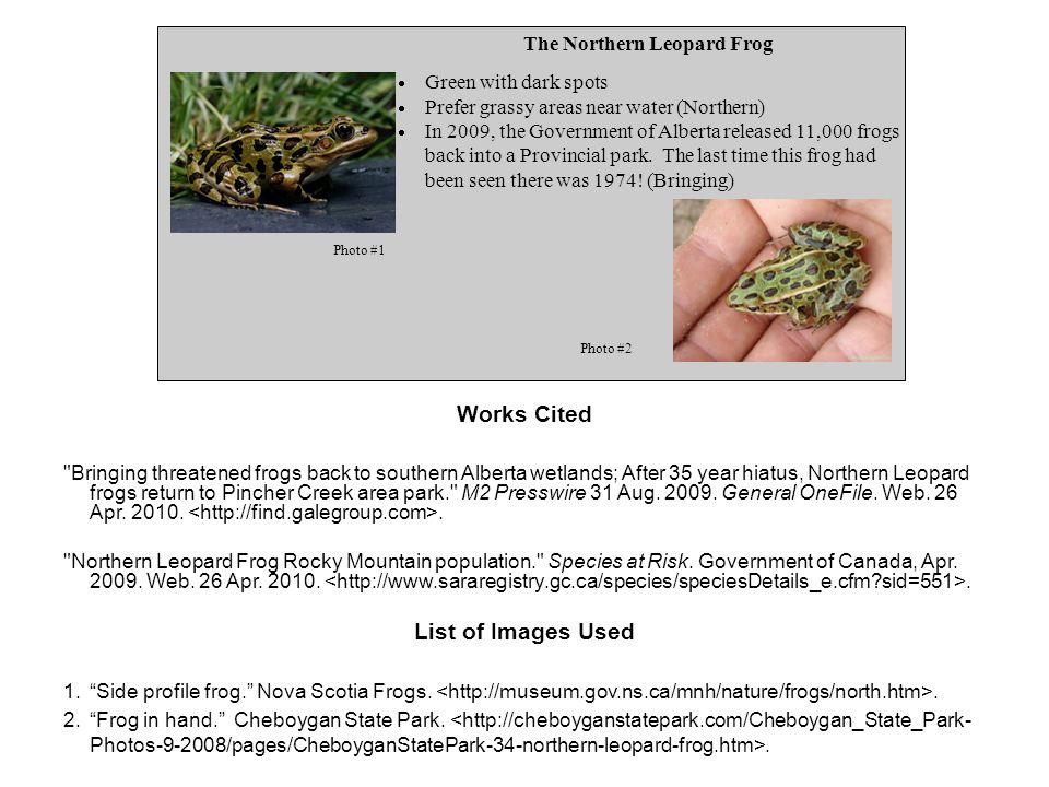 The Northern Leopard Frog  Green with dark spots  Prefer grassy areas near water (Northern)  In 2009, the Government of Alberta released 11,000 frogs back into a Provincial park.