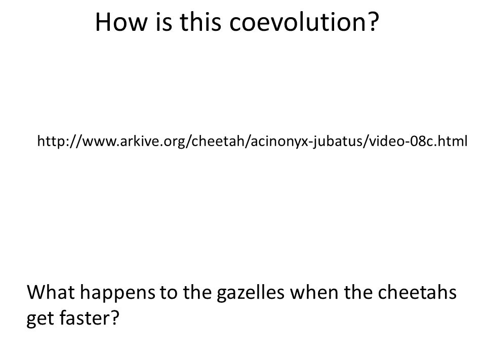 Based on the data presented, ____________________ are in a coevolutionary relationship.