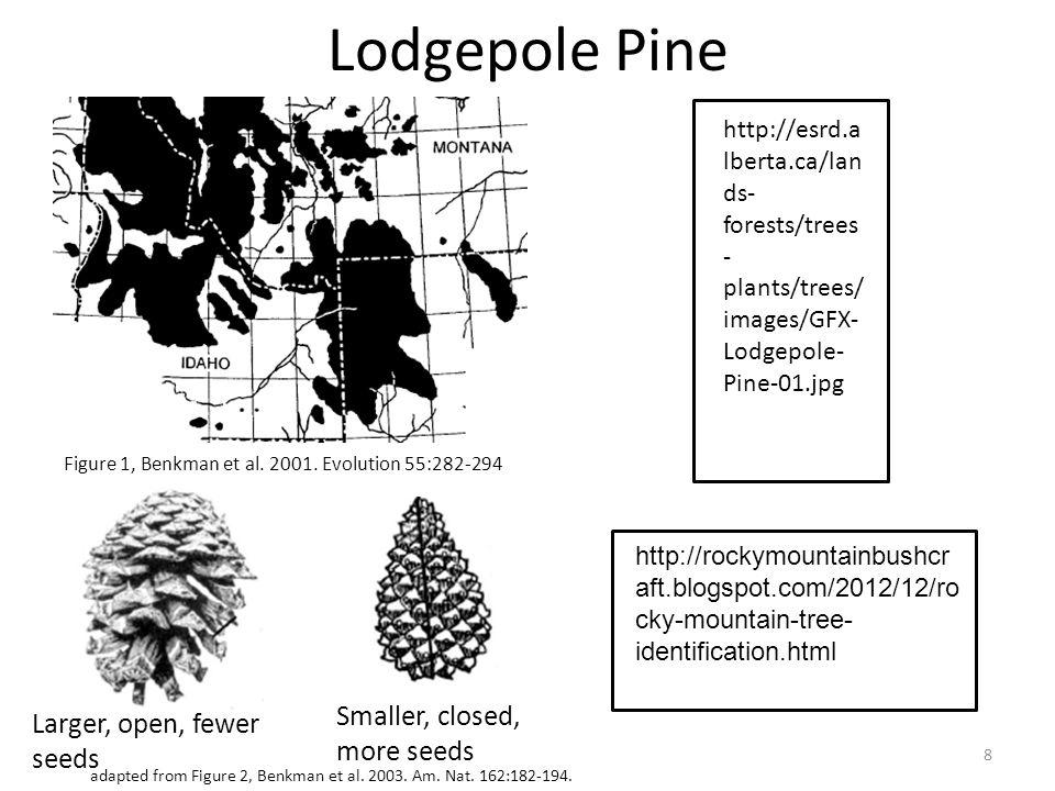 Lodgepole Pine Larger, open, fewer seeds Smaller, closed, more seeds 8 Figure 1, Benkman et al. 2001. Evolution 55:282-294 adapted from Figure 2, Benk