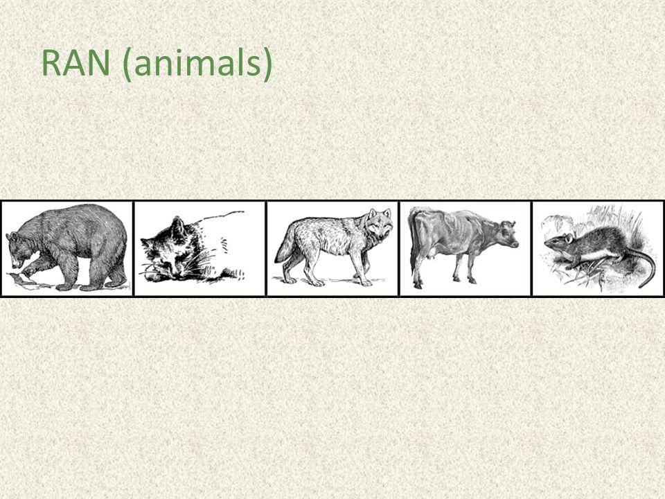 RAN (animals)