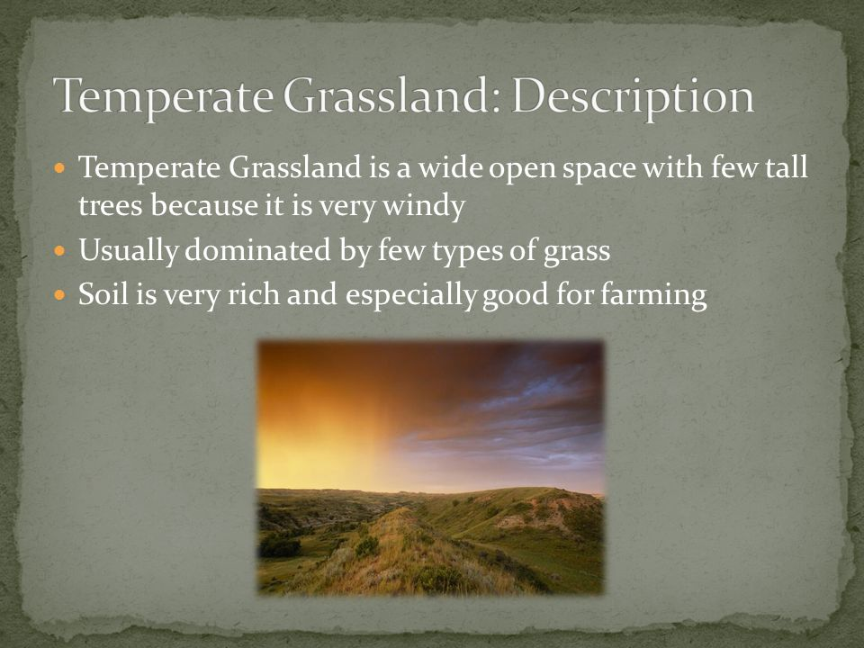 Temperate Grassland is a wide open space with few tall trees because it is very windy Usually dominated by few types of grass Soil is very rich and es