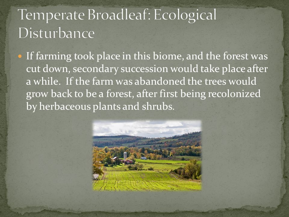 If farming took place in this biome, and the forest was cut down, secondary succession would take place after a while. If the farm was abandoned the t