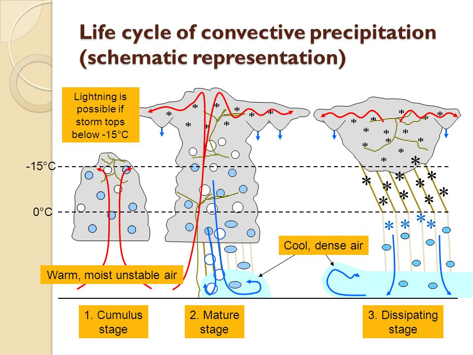 Cool, dense air Life cycle of convective precipitation (schematic representation) 1.