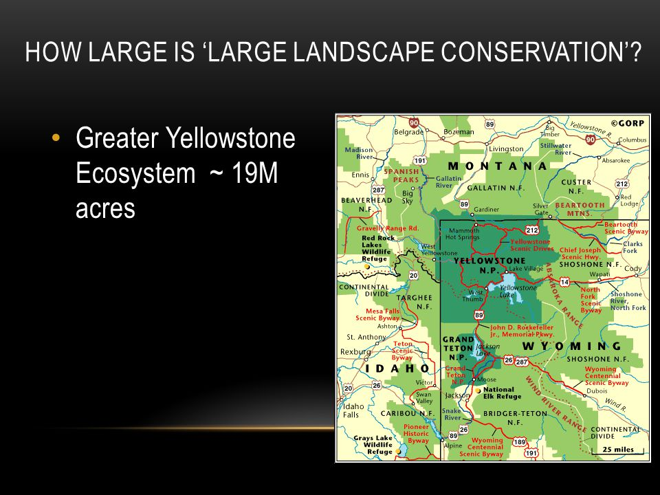 HOW LARGE IS 'LARGE LANDSCAPE CONSERVATION' Greater Yellowstone Ecosystem ~ 19M acres