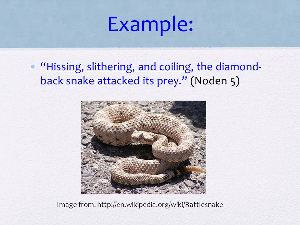 """Example: """"Hissing, slithering, and coiling, the diamond- back snake attacked its prey."""" (Noden 5) Image from: http://en.wikipedia.org/wiki/Rattlesnake"""