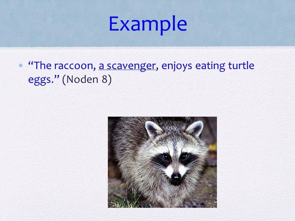 "Example ""The raccoon, a scavenger, enjoys eating turtle eggs."" (Noden 8)"