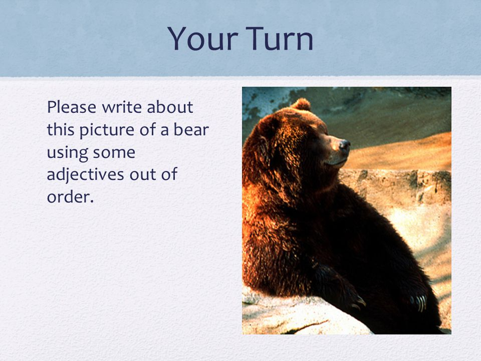 Your Turn Please write about this picture of a bear using some adjectives out of order.