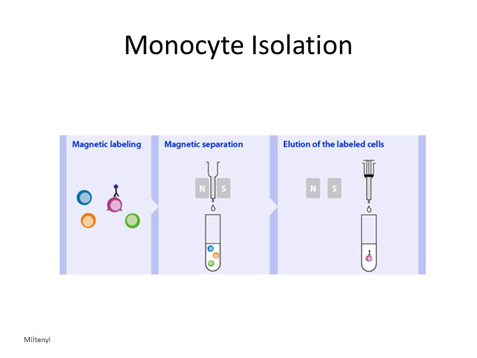 Monocyte Isolation Miltenyi