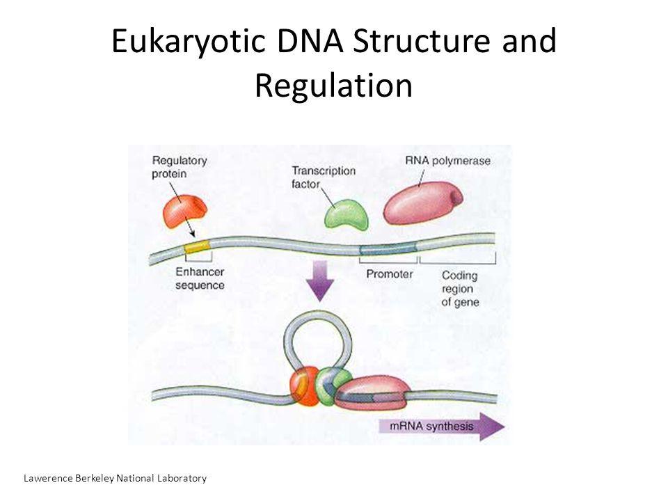 Epigenetic Histone Modifications The Alberta Epigenetics Network