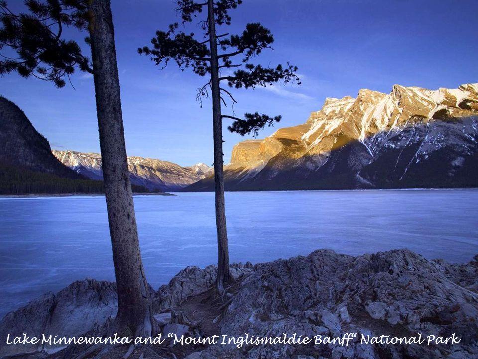 "Bighorn Sheeps. ""Jasper"" National Park."