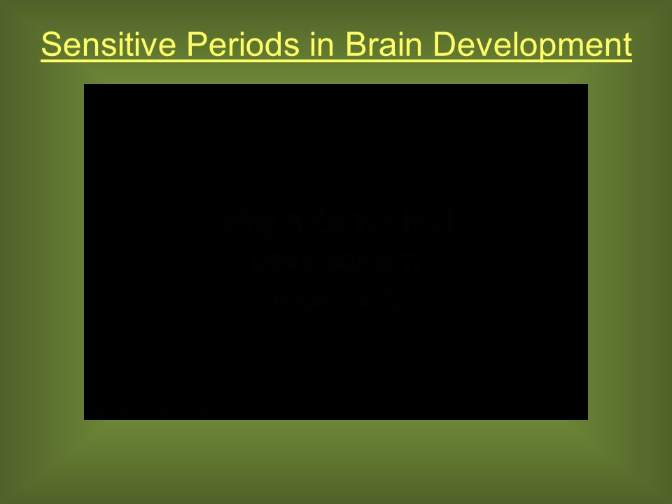 Sensitive Periods in Brain Development