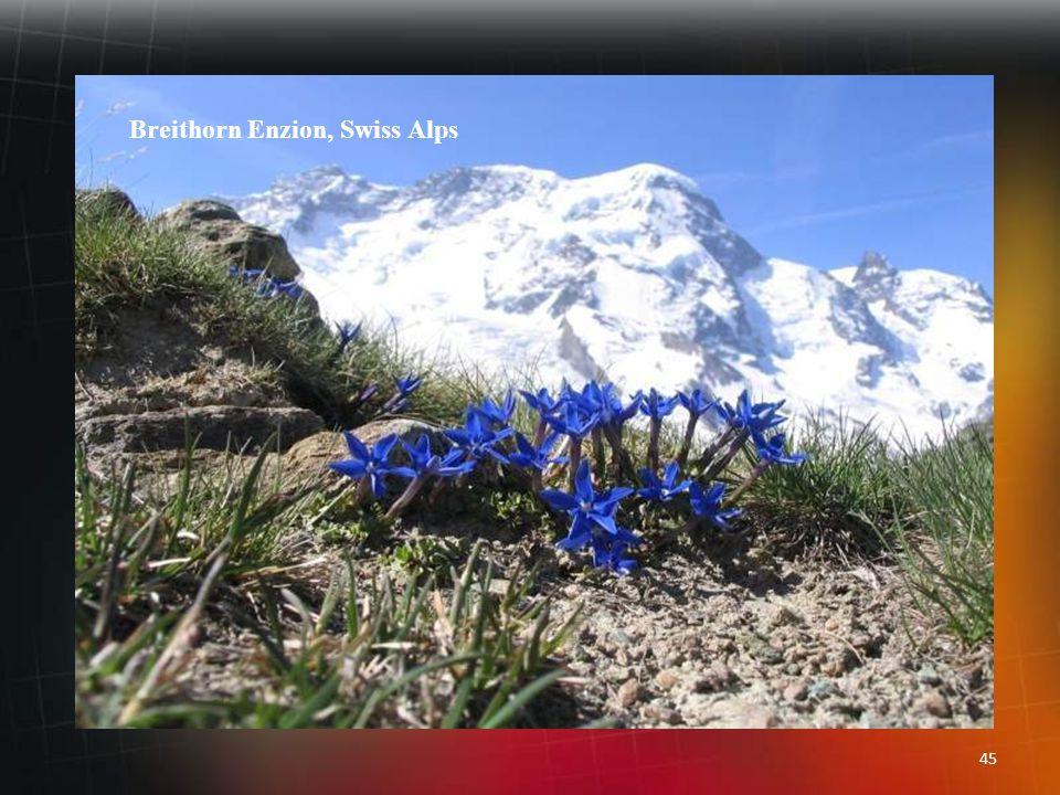 44 Aletschgletscher Eggishorn, Switzerland Europa