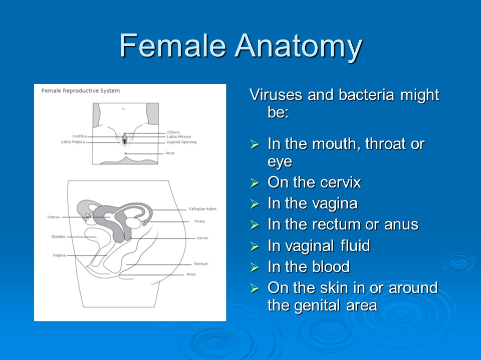 Female Anatomy Viruses and bacteria might be:  In the mouth, throat or eye  On the cervix  In the vagina  In the rectum or anus  In vaginal fluid  In the blood  On the skin in or around the genital area