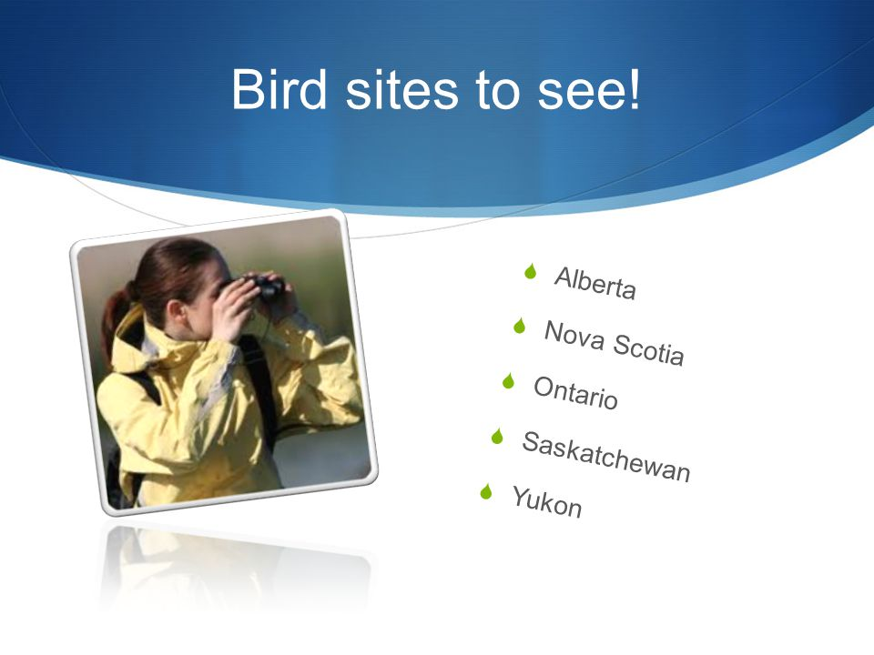 Bird sites to see!  Alberta  Nova Scotia  Ontario  Saskatchewan  Yukon